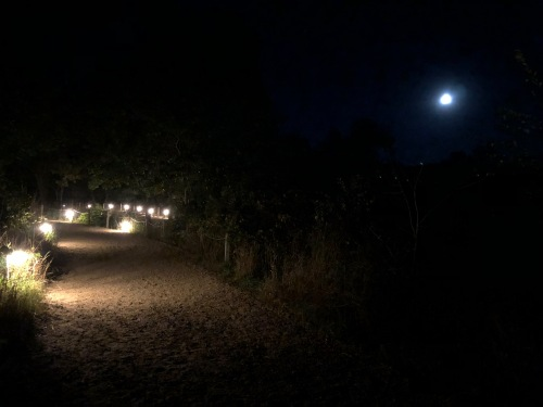 picture of lit path with nearly-full moon